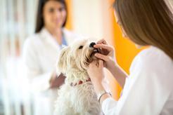 Brzydki zapach z pyska psa – przyczyny, zwalczanie, zapobieganie
