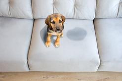 Jak nauczyć psa załatwiać się na dworze? Poradnik praktyczny