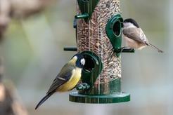 Pokarm dla ptaków dzikich i domowych - rodzaje karmy, cena, opinie
