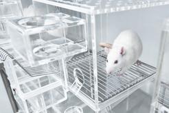 Klatka dla szczura - modele, ceny, wymiary, wyposażenie