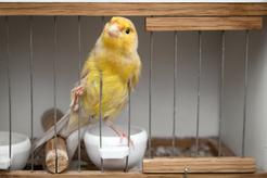 Ptaki ozdobne – gatunki, zdjęcia, informacje, ciekawostki