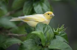 TOP 10 gatunków ptaków hodowlanych w Polsce