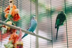 Jak wygląda woliera dla ptaków? Wyjaśniamy krok po kroku