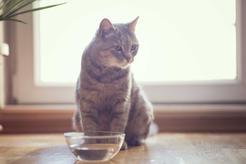 Klasyczne czy automatyczne poidełko dla kota? Porównujemy dostępne modele