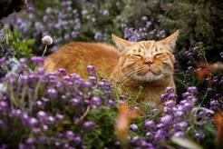 Feromony dla kota – rodzaje, zastosowanie, ceny, opinie