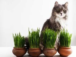 Dlaczego kot je trawę? O tych powodach nie mieliście pojęcia