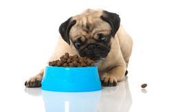 Karma Royal Canin Gastro Intestinal – skład, opis, cena