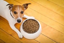 Karma Happy Dog – rodzaje, skład, cena, opinie