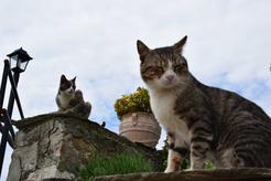 Ile żyją koty dachowce? Zobacz, jaka jest długość życia popularnego kota