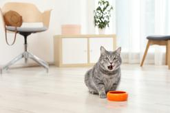 Karma dla kota Orijen – składniki, wartości odżywcze, cena