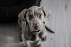 Jakie akcesoria dla zwierząt domowych warto mieć w domu?