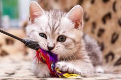 TOP 5 najfajniejszych zabaw dla małych kotów. Zobacz, w co bawić się z kociakiem