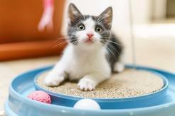 TOP 10 najfajniejszych zabawek dla dużych kotów. Doradzamy, co wybrać