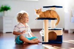 5 najfajniejszych zabaw dla dużych kotów. Oto zajęcia, które pokocha Twój kot