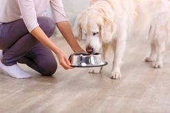 Ranking karm dla psów. Oto najlepsze karmy suche i mokre