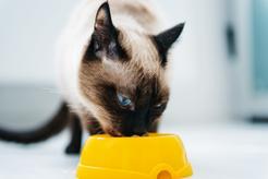 Karma Happy Cat – składniki, wartości odżywcze, cena