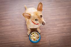 Na co zwracać uwagę podczas wyboru karmy dla psa?