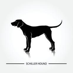 Gończy Schillera - informacje, charakter, pielęgnacja, opinie