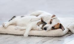 Posłania dla psów – rodzaje, wymiary, ceny, porady praktyczne
