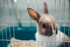 Żwirek dla królika – rodzaje, skład, cena, opinie, porady