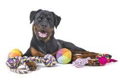 TOP 10 najfajniejszych zabawek dla dużych psów. Zobacz, co warto wybrać