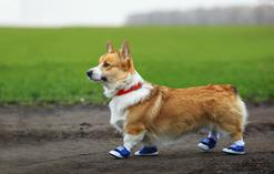 Jakie buciki na zimę dla psa sprawdzą się najlepiej? Oto popularne modele