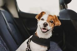 Pasy dla psa – rodzaje, ceny, montaż, opinie, porady
