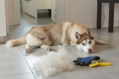 Rękawica do czesania psa – rodzaje, ceny, praktyczne porady