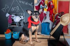 Gdzie kupić tanie ubranka dla psów? Oto nasze propozycje