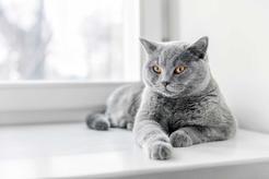 Co oznacza kichanie u kota? Wyjaśniamy krok po kroku