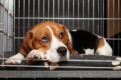 Klatka dla psa – rodzaje, zastosowanie, cena, samodzielne wykonanie