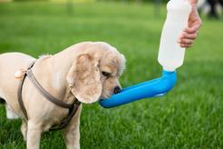 Poidło dla psa – rodzaje, ceny, polecane modele, porady
