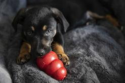 TOP 3 gry dla psów. Zobacz, w co bawić się z pupilem