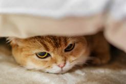 Białaczka u kota (FeLv) - przyczyny, objawy, sposoby leczenia, rokowania