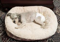Pampersy dla psa – informacje, producenci, ceny, opinie