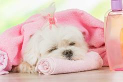 Jaki szampon dla psa alergika? Oto polecane produkty