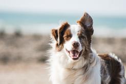 Czy warto postawić na mokrą karmę dla psa?