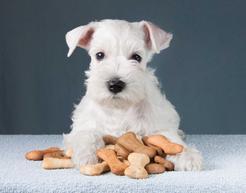 Przekąski dla psa i naturalne przysmaki dla psa – najlepsze produkty