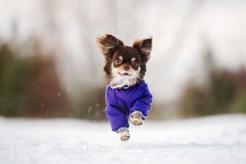 Ubranka dla małych psów – rodzaje, wzory, ceny, porady praktyczne