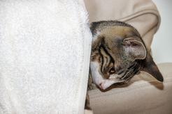 Jak chronić psy i koty przed nicieniami skórnymi?