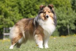 TOP 10 ras psów znanych z filmów i książek. Oto nasz ranking