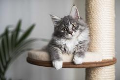Drapak sufitowy dla kota – rodzaje, opis, ceny, porady użytkowników