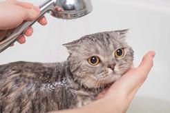 Jak umyć kota? Praktyczny poradnik kąpania małych i dorosłych kotów