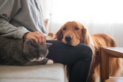 Jak przebiega socjalizacja psa - wyjaśniamy krok po kroku