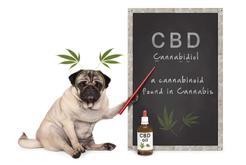 Na co pomaga olejek CBD dla psów i kotów?
