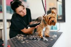 Trymer dla psa - rodzaje, sposoby działania, ceny, porady dotyczące użytkowania