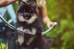 Koszyk dla psa na rower - rodzaje, opis, ceny, sposoby montażu