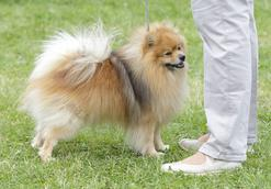 Jak nauczyć psa czystości? 5 sposobów, które się sprawdzą