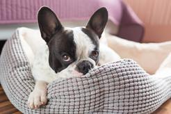 Jak dobrać legowisko odpowiadające potrzebom psa? Praktyczny poradnik