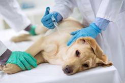 Ile kosztuje uśpienie psa? Zobacz, ile trzeba zapłacić u weterynarza